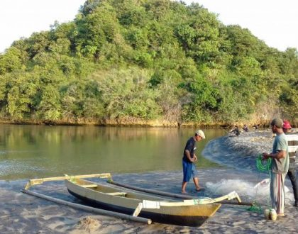 Menanam mangrove di sungai Bajul Mati