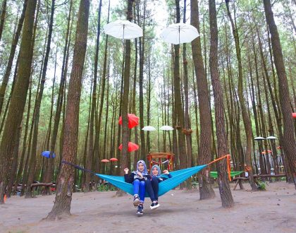 Teduh dan Syahdu! Hutan Pinus Semeru Malang Wajib Dikunjungi