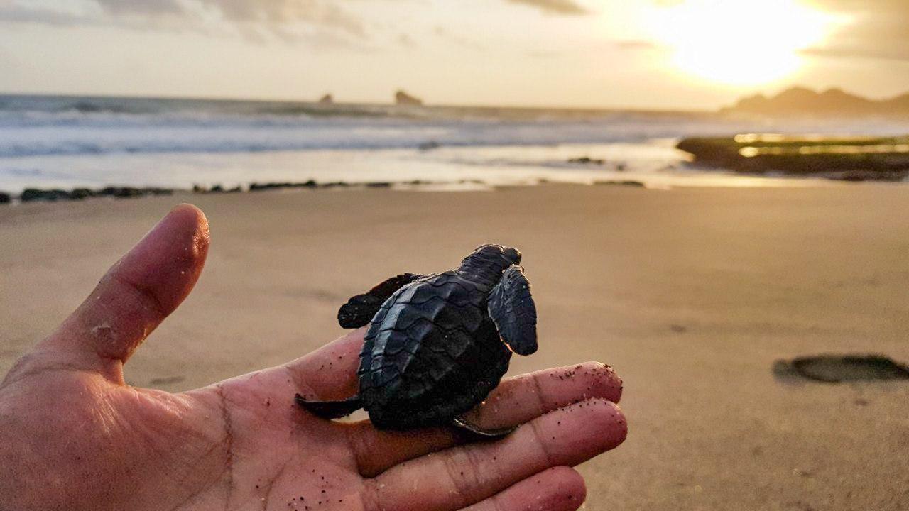 One Day Trip Wisata Edukasi Penyu Sambil Melepaskan 300 Tukik Di Pantai Bajul Mati